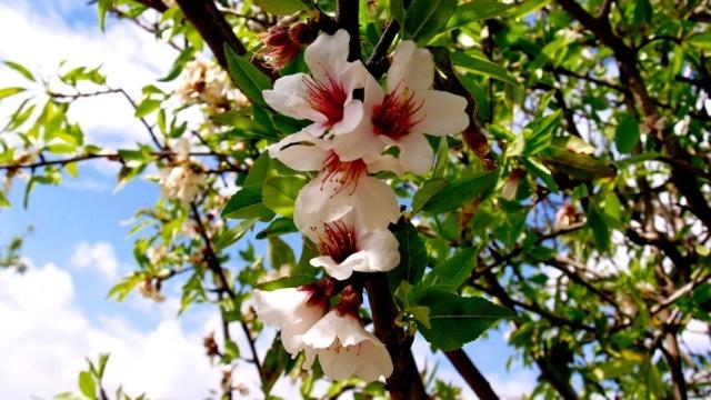 Smukke hawaiblomst