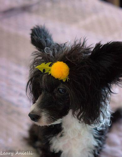 Одуванчик (Dandelion) 2 | Flickr - Photo Sharing!