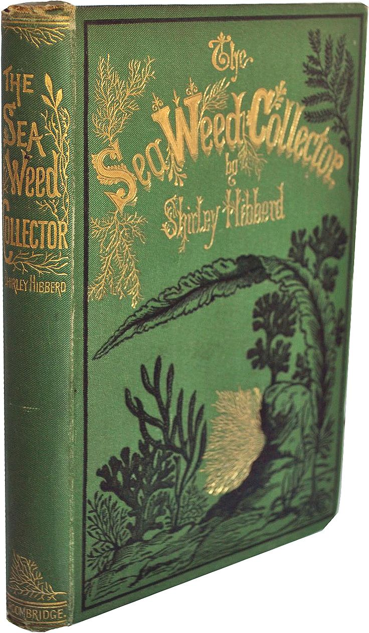 """""""the seaweed collector"""" by shirley hibberd, gorgeous green antique book with gold & black embossing"""