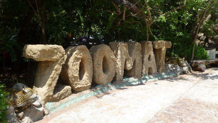 Zoológico Regional Miguel Álvarez del Toro o ZOOMAT es considerado como uno de los mejores zoológicos de Latinoamérica en su género. Exhibe, estudia, protege y preserva especies en peligro de extinción tales como jaguares, nutrias de Río y monos saraguatos entre otros.