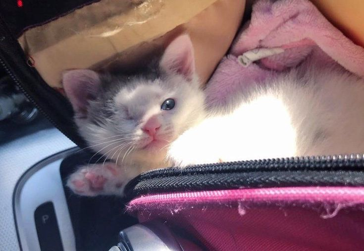One Eyed Kitten Found On The Street Turns Into The Sweetest Purrito Kittens Tiny Kitten Foster Mom