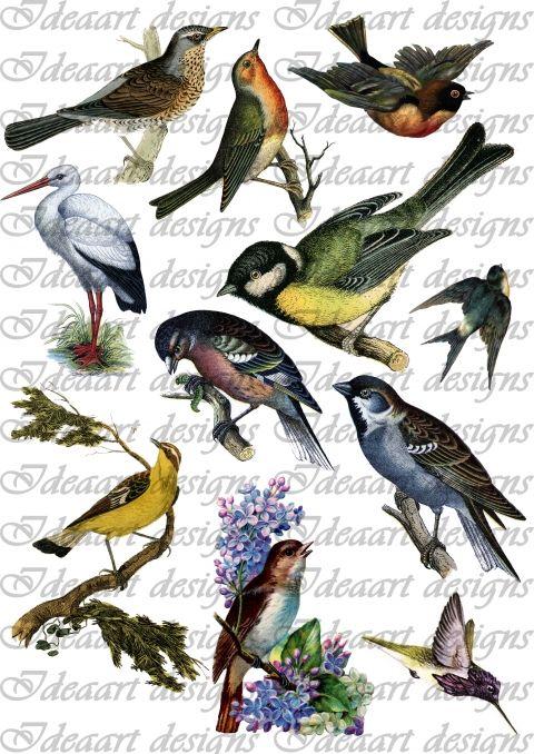 Mejores 10 imágenes de madarhang en Pinterest   Pájaros bonitos, 12 ...