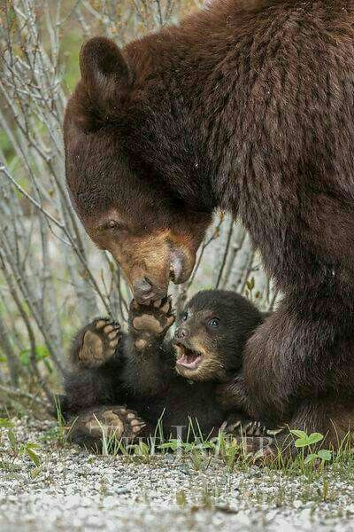 Playtime For Mother And Cub!