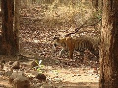 Infinity Wilderness Resort -  Bandhavgarh