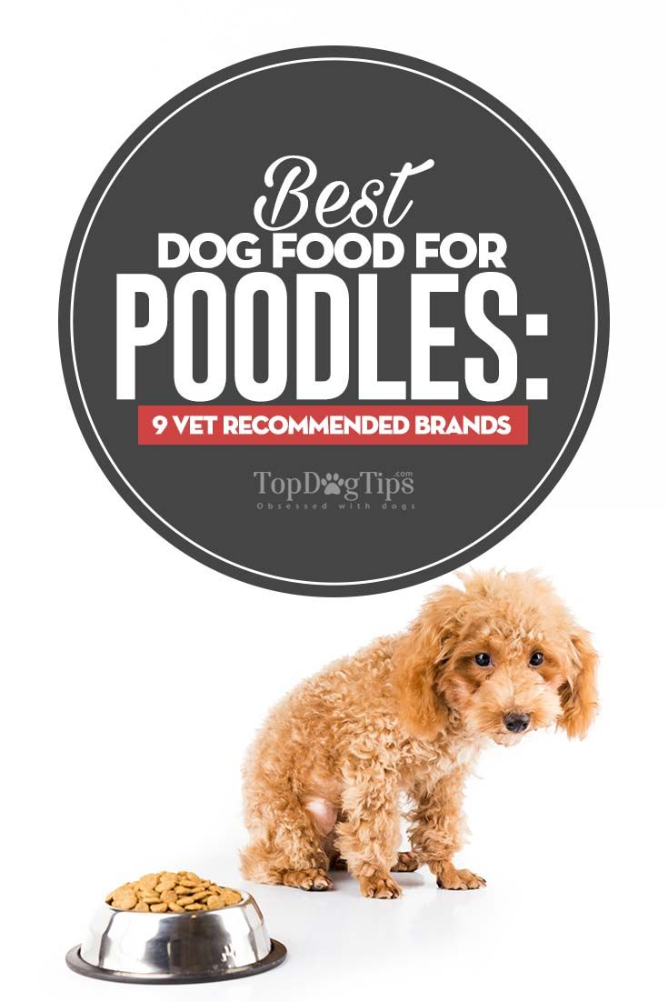 Vet Recommended Dog Food For Poodles Best Dog Food Best Dry Dog