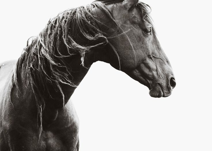 Nick leary photography black beauty est magazine equine moments pinterest magazines photography and horse