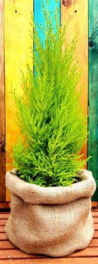 GIANT JUTE SACK Round Luxury Hessian Pot Burlap Planter
