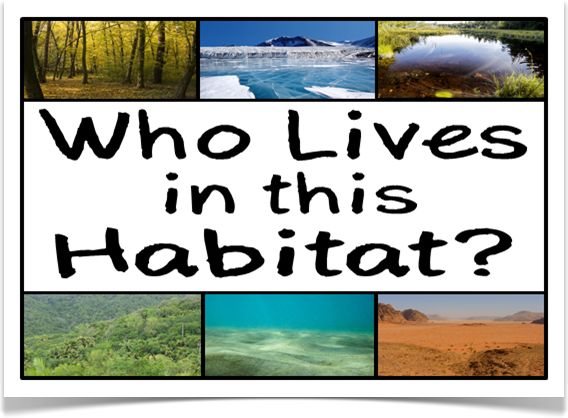 Who Lives in this Habitat? - Treetop Displays - A set of 12 A4 posters displaying photographs of a range of different habitats. With a prompting title poster, there are 11 different habitats that prompt children to think about which animals/ creatures would live in a specific habitat. Designed by teachers for Early Years (EYFS), Key Stage 1 (KS1) and Key Stage 2 (KS2).