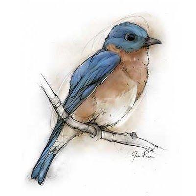 Blue bird illustration.. theillustratorswife.