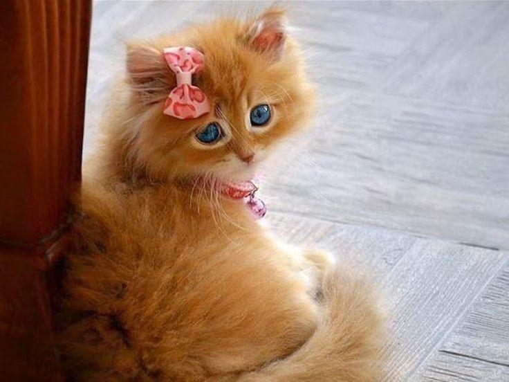 belle petit chaton