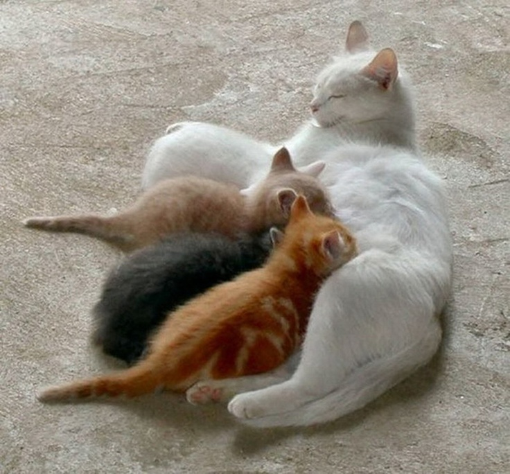 Mommy Cat And 3 Kittens
