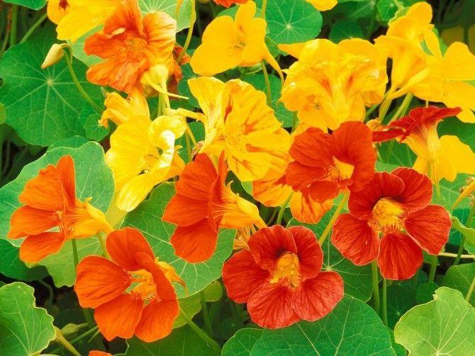 Дикорастущие растения: съедобные и лекарственные травы из леса. Фото и названия.