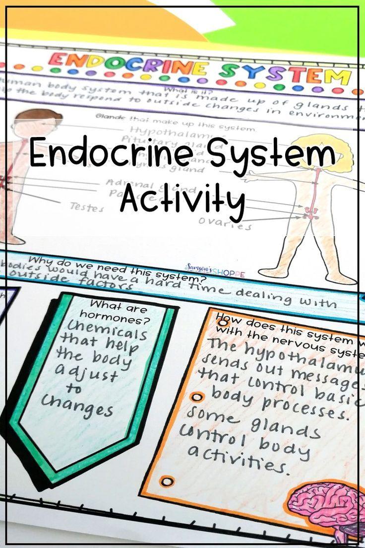 Endocrine System Activity In 2020 Endocrine System Endocrine System Activities Life Science Activities