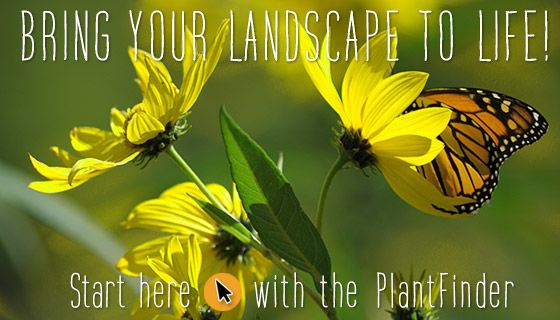 Native plant nursery for North America - confirm if plants are VA native before purchase.