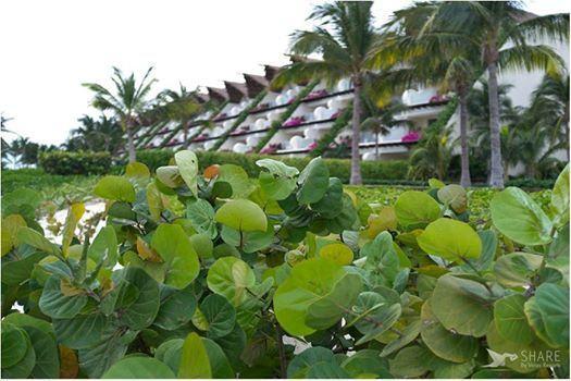 Отель Гранд Велас Ривьера-Майя окружен буйной тропической растительностью полуострова Юкатан.... http://rivieramaya.grandvelas.com/russian/