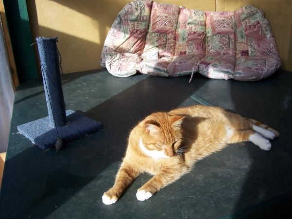 John's Pampered Pooch - Kitty Condo, Relaxing in the sun. #Catboarding #Catsitter #catcare