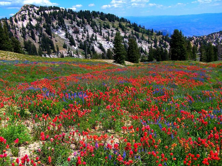 Utah's Albion Basin Cecret Lake: A Breathtaking Wildflower Hike