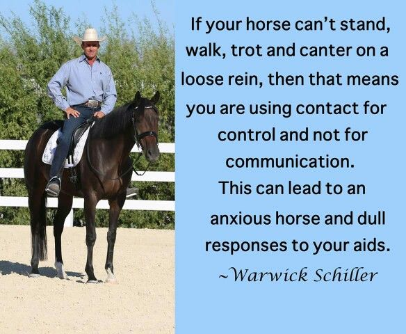 Warwick Schiller- this is what I strive for in every horse before I do anything else.