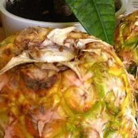Vous voulez faire mûrir un ananas rapidement ? Voici un p'tit truc simple efficace pour le manger plus vite.  Plus besoin d'attendre plusieurs jours pour que l'ananas soit mûr.  Pour accélérer le mûrissement, l'astuce est de couper les feuilles et de conserver l'ananas à l'envers. Le jus sucré de l'ananas va ainsi mieux se répartir dans tout le fruit. Découvrez l'astuce ici : http://www.comment-economiser.fr/faire-murir-ananas-rapidement.html