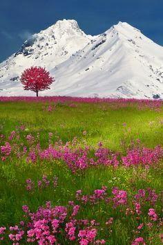 The Swiss Alps @}-,-;--