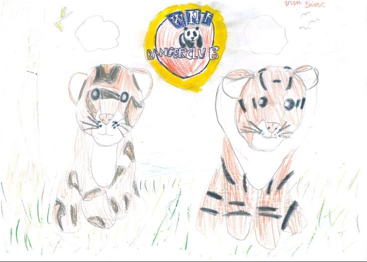 Binc (8) maakte deze tekening van twee tijgers voor de WNF rangerclub. Meer weten over de rangerclub? Klik op de pin!