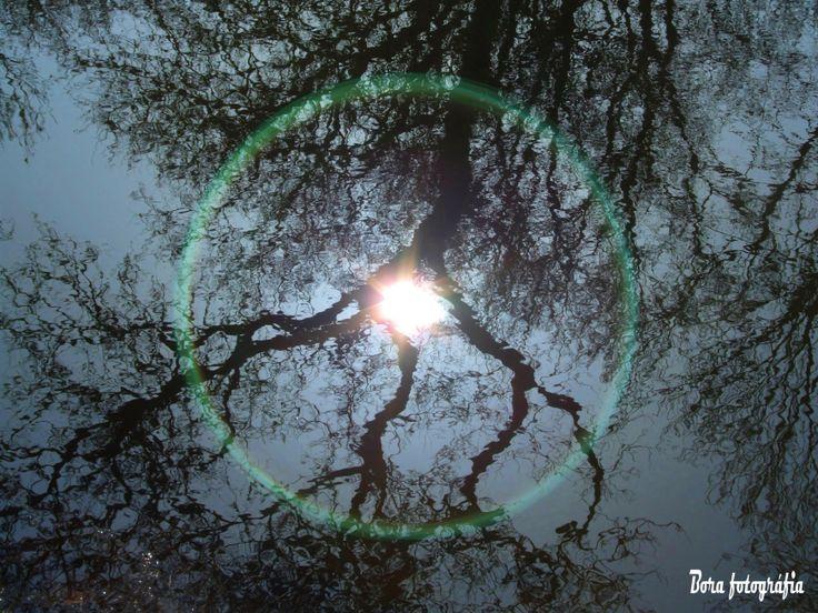 Pocsolyatükör, fénnyel-fával02