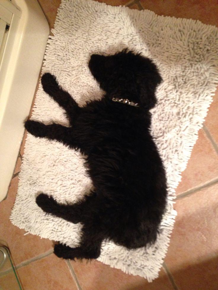 Jackson loves sleeping everywhere!!! This is Jackson in the bathroom!!!