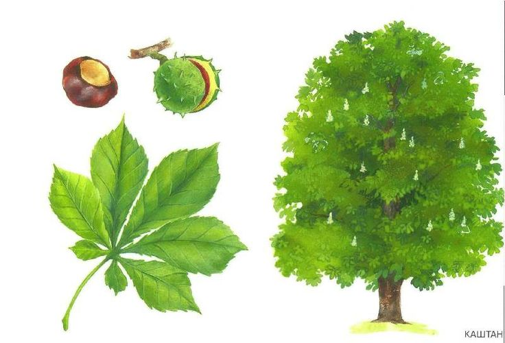 drzewo 8