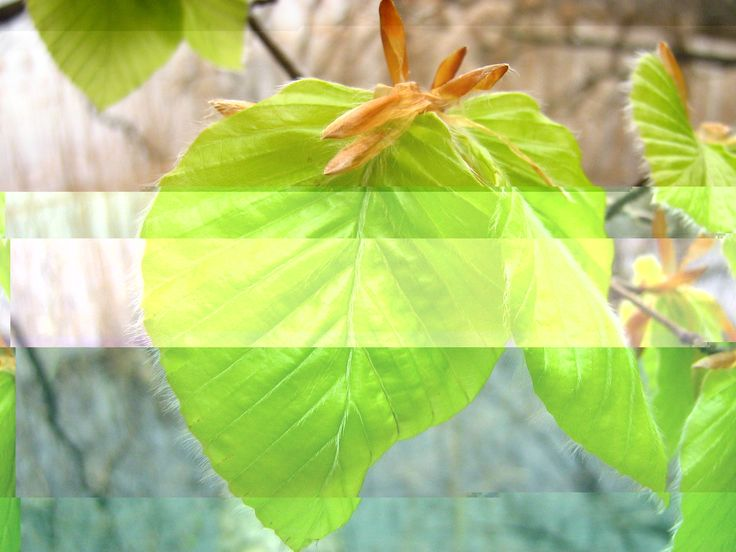 Načo kupovať šalát v obchode, keď nám rastie rovno na strome | Blog.Eugenika