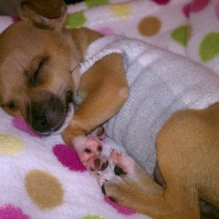 Puppy Sweater : Recycled Socks--instructables
