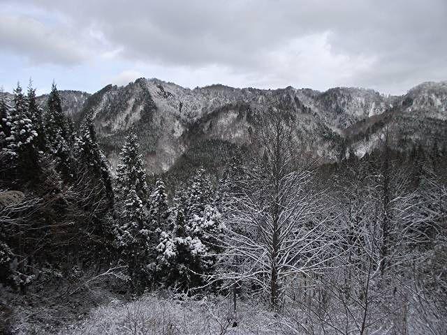 東北の山が育んできた山の狩猟民「マタギ」。マタギの今を知るため、「しのび猟」の季節に秋田の山を訪れた。