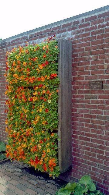 Beautiful Vertical Flower Garden, nasturtium maybe? green wall, living wall