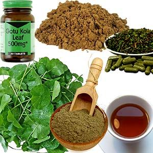 Gotu Kola - a fountain of youth and the guardian of sound mind