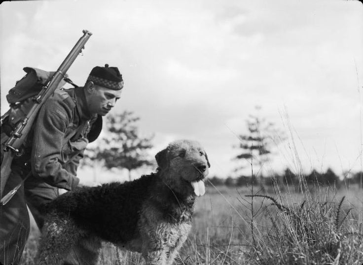 An Airedale dog poses with a Canadian soldier during training somewhere in Britain.