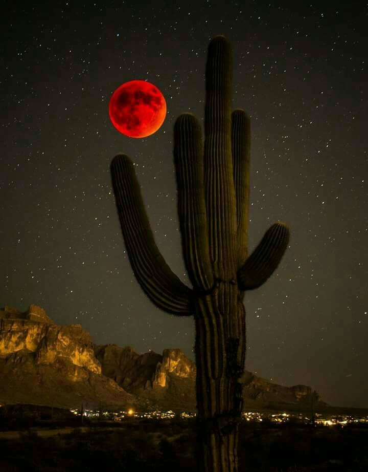 Arizona Blood Moon- where I'm from                                                                                                                                                                                 More