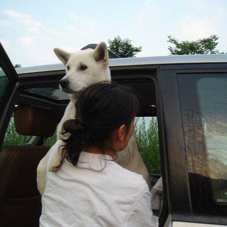 オトボケ犬