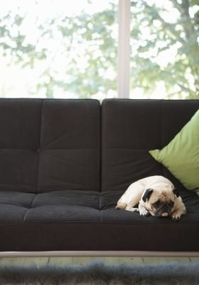 When getting a puppy, it's essential to set house rules to keep your home intact. To your puppy, the couch might seem like a cozy lounging area, and whether you allow him to sit on it is a personal decision that all family members should be aware of. If the couch is off-limits, and one person lets your pet companion jump and lie on it, confusion can arise and all your training will be for nothing. To avoid this, make up your mind -- are you going to give in to your pup's couch-jumping…
