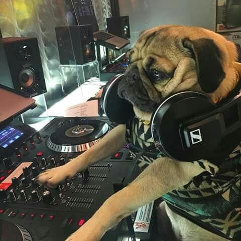 DJ Doug The Pug