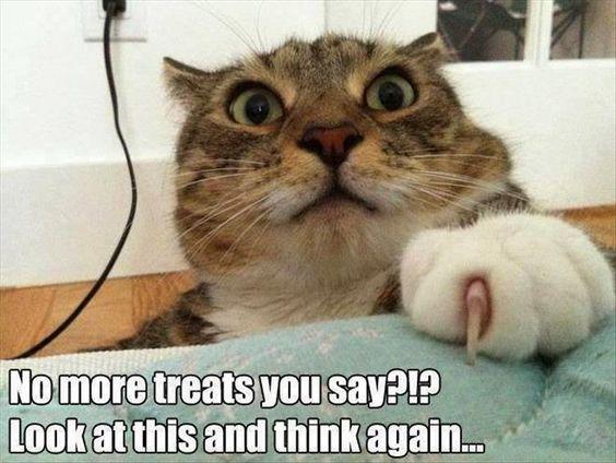 30 Humor Animal Pictures #animals #Humor