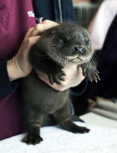 26 από τα πιο χαριτωμένα μωρά ζωάκια που έχετε δει! (Εικόνες)