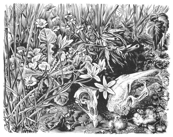 Dirk van Gelder, Dierenschedels op grasgrond, 1947.  Houtgravure. h.14 cm. x b.18 cm. Gedrukt in een oplage van 150.
