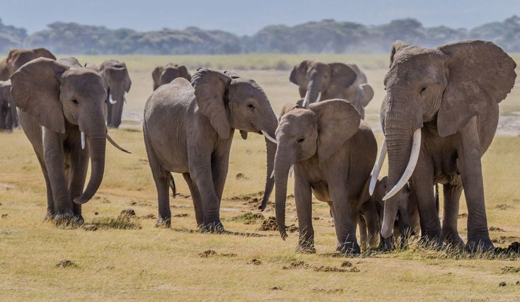 3 Positive Signs the Tides Are Turning Against the Ivory Trade