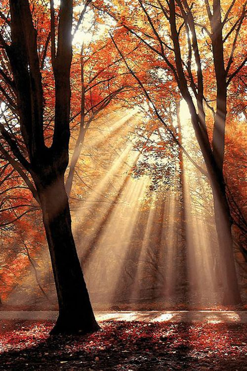 Dressed To Shine ~ By Lars van de Goor