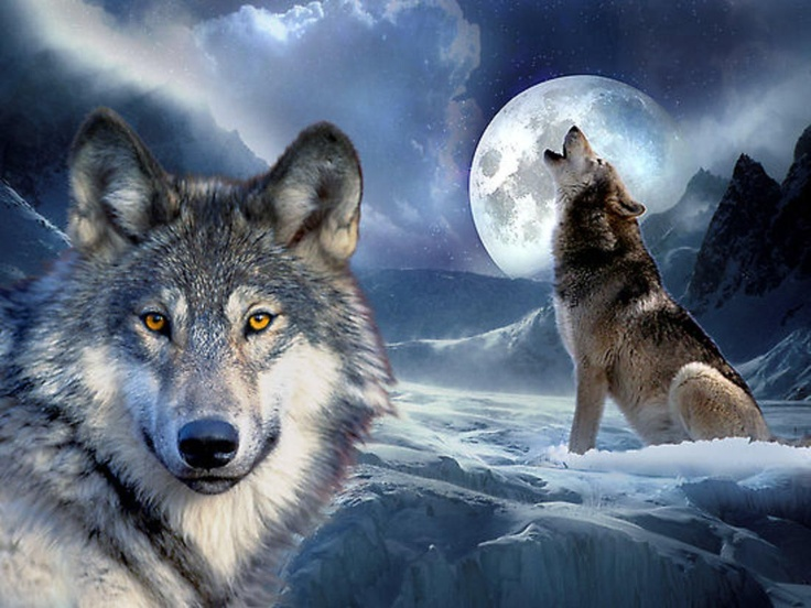 Wonderful Wolf, oh my God i wish i have a wolf or many wolf in my house, but i scare
