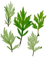 3 wild herbs for lucid dreaming - article at the link