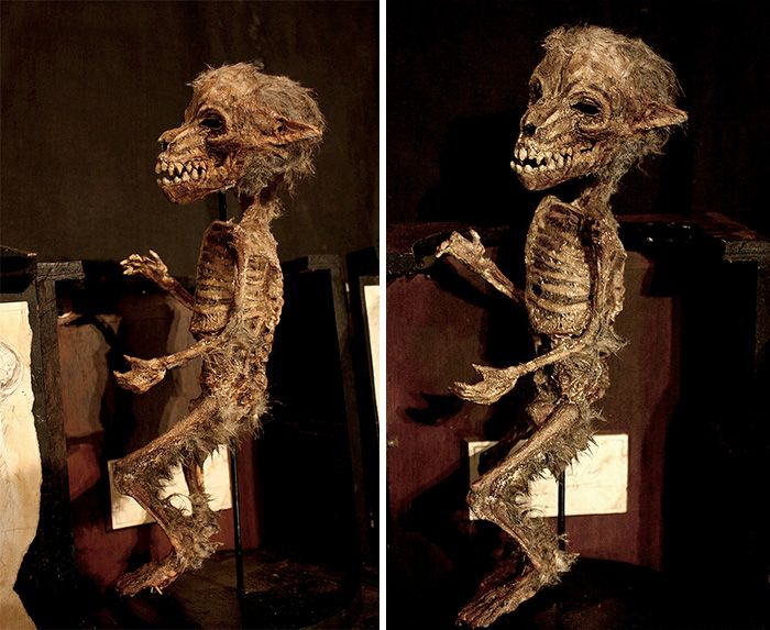 Weird Skeletten ontdekt in de kelder van een oud huis in Londen