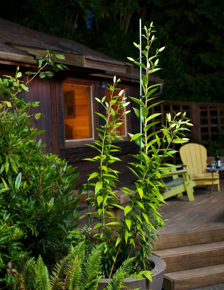 Garden Grow Stakes // Www.allsopgarden.com