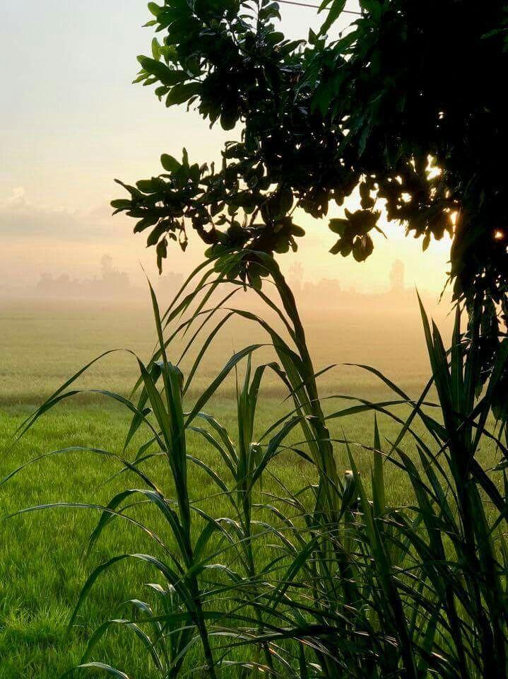 Photo of my sunrise on the farm   by my friend, Mr. Williams Bryson.