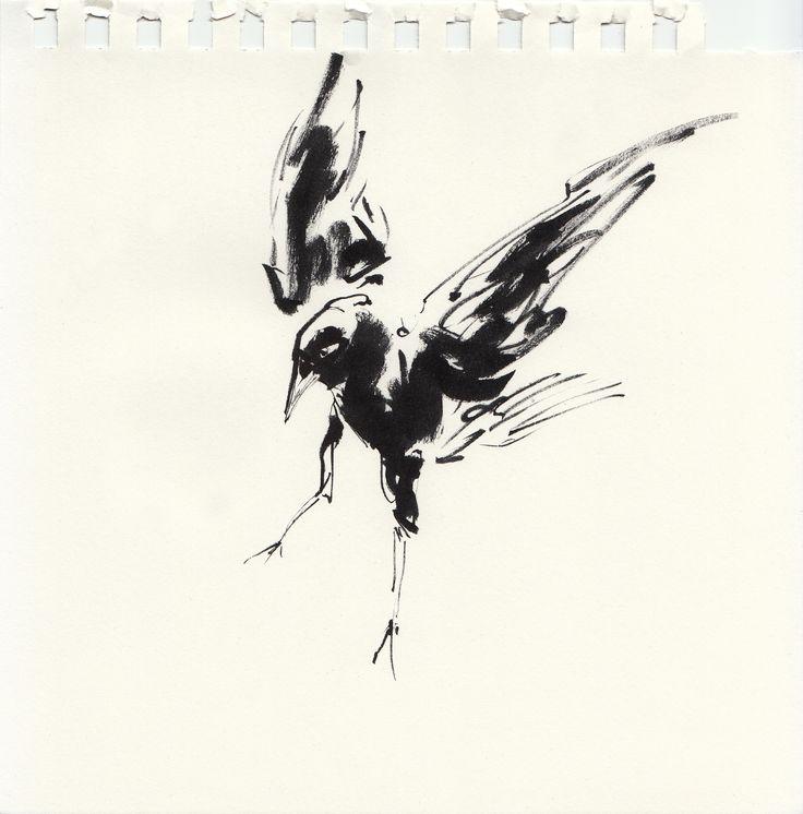 Zeichnung von Daniel P. Dwyer - Vogel 07: Tusche auf Papier (90g/m²) mit Abrisskante (Dohle Vogel im Landeanflug Tierzeichnung Tuschezeichnung Krähe)