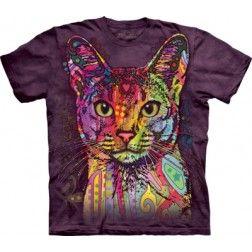 Abyssinian - Cat